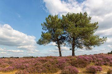 Kalmthoutse Heide von Bram van Broekhoven