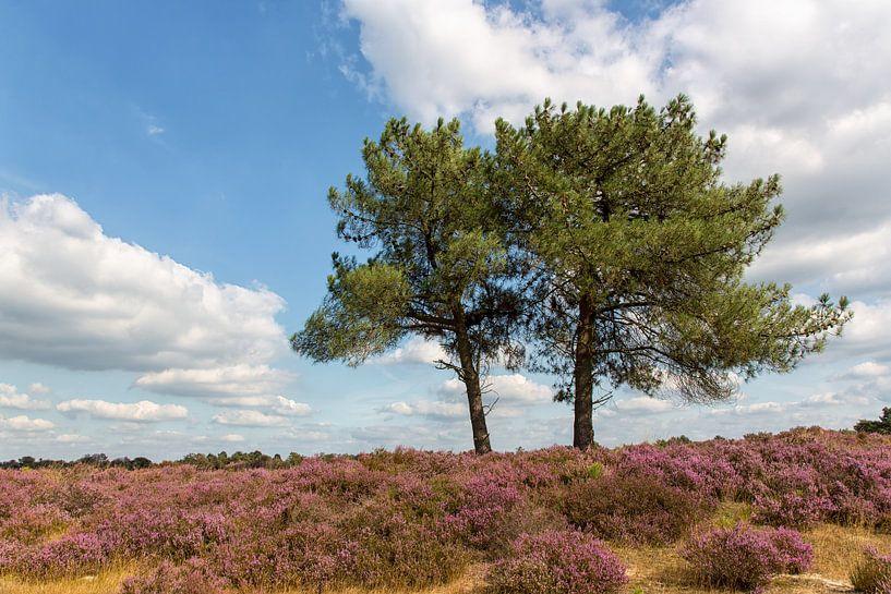 Kalmthoutse Heide van Bram van Broekhoven