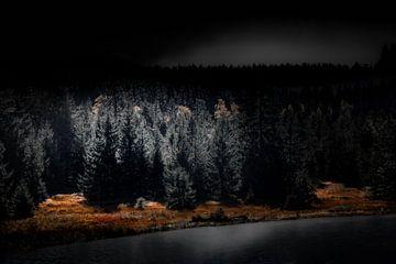 Der Schwarzwald bei Nacht von Ella Schnur