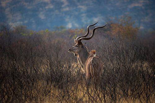 Kudu op de Uitkijk van