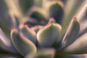 Künstlerische Sukkulentenpflanze von Cathy Roels