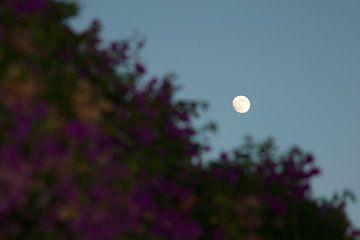 Maan achter de struiken van Jean-Paul Renaud