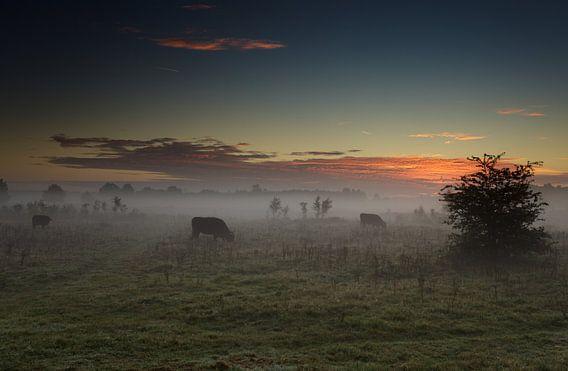 Morning Moo(ds) van Hans Koster