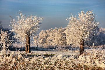 Berijpte bomen sur Franke de Jong