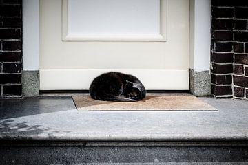Schwarze Katze von Emel Malms