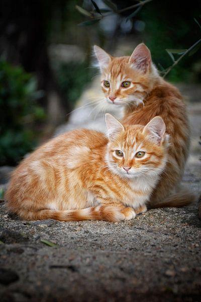 Katzen in Sardinien von Claudia Moeckel