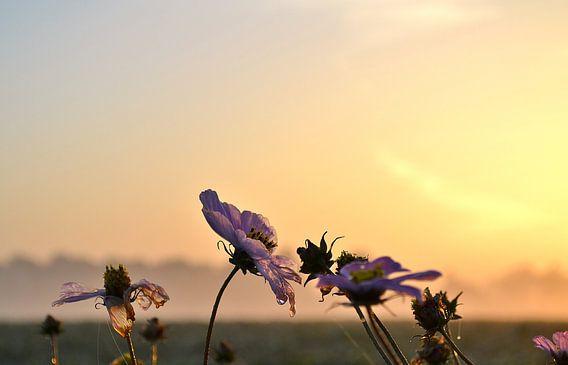 Bloemen bij zonsopkomst van Melanie Weeda