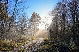 Magnifique chemin forestier avec différentes sortes d'arbres et de rayons de soleil par un matin fro