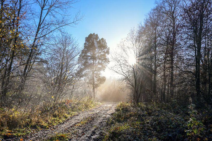 Magnifique chemin forestier avec différentes sortes d'arbres et de rayons de soleil par un matin fro sur Maren Winter
