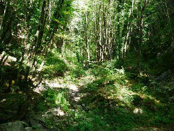 lichtval in het bos van AJE Lich