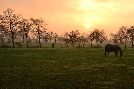 Paard in de opkomende zon, Doezum, Groningen