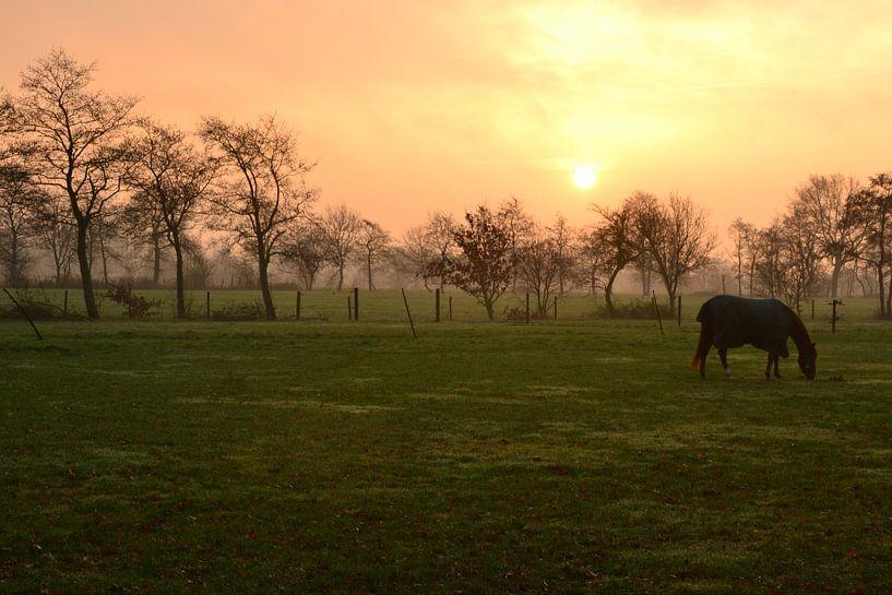 Paard in de opkomende zon, Doezum, Groningen van Mark van der Werf