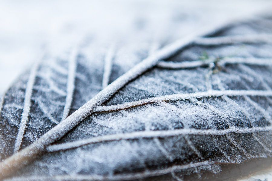 Aankomende Winter van Leon Weggelaar