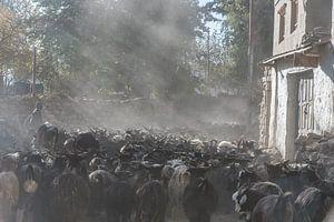 Kudde geiten van Photolovers Reisfotografie