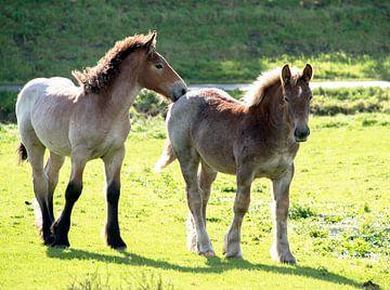 twee jonge veulens von Compuinfoto .