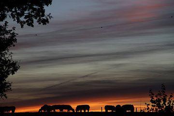 Bunter Sonnenuntergang von Geert Neukermans
