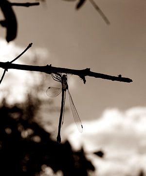 Libelle auf einem Zweig von joyce kool