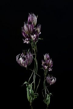 Stilleven opgedroogde bloem kunstwerk