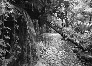 Tropische tuin, in zwart wit van