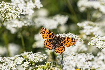 Oranje vlinder van STEVEN VAN DER GEEST