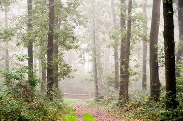 hekje in het mistige bos van Ilja Kalle