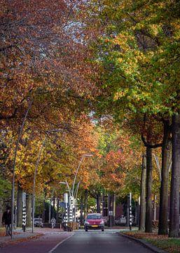 Auto in de herfst van Wouter Bos