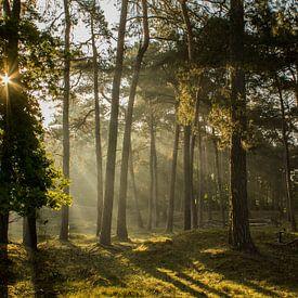 Sprookjesachtige zonnestralen van Loes Fotografie