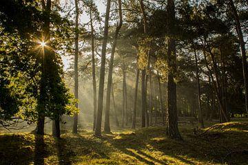 Lever de soleil féerique sur Loes Fotografie