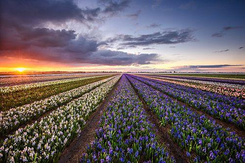 Nederlands ochtend perspectief van Pieter Struiksma