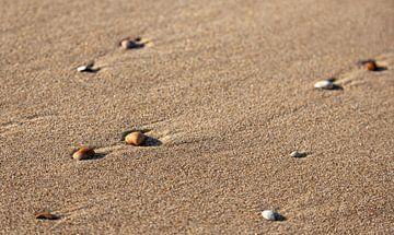 Schelpjes op het natte strand van Percy's fotografie