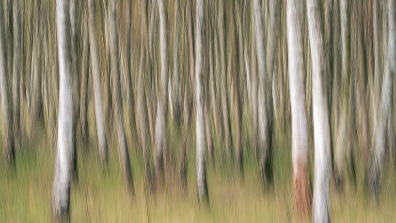 Birkenwald abstrakt ICM von Vincent Fennis