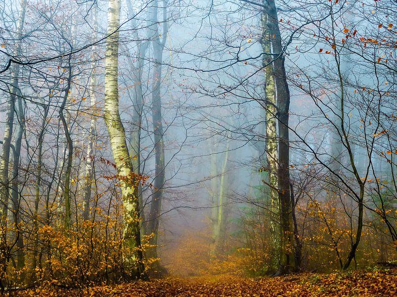Forest in the autumn van brava64 - Gabi Hampe