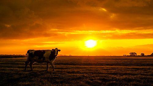 De zonnige herfst koe