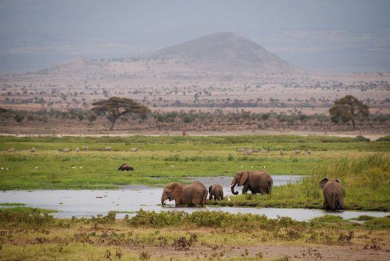 Kenya van José van Hell