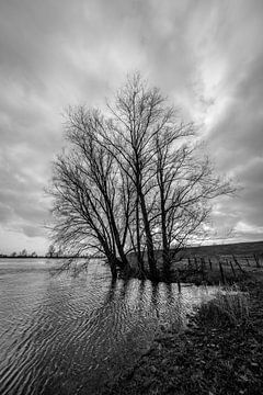 Hoog water in de uiterwaarden van de rivier de Lek. van Tony Buijse