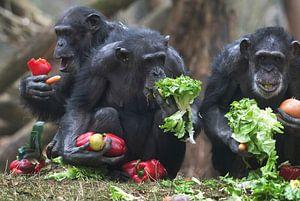 Chimpansees eten groenten.