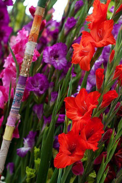 Prachtige rood en paarse Gladiolen van Patricia Verbruggen