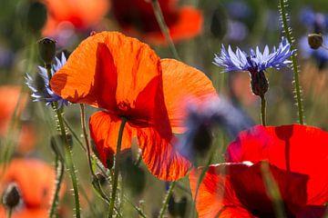Klaproos en korenbloem von Yvonne van der Meij