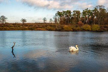 Witte zwaan zwemt sierlijk in een meer omgeven door bomen van Ruud Morijn
