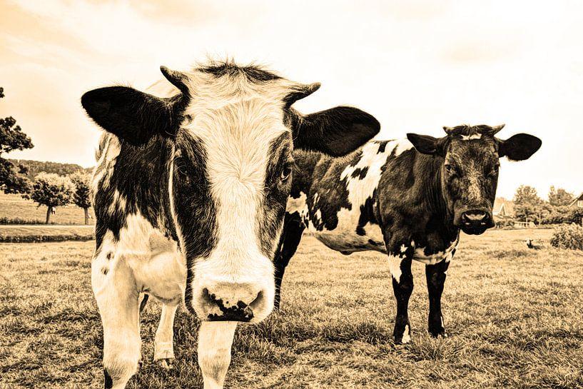 Koeien in Weiland Sepia van Hendrik-Jan Kornelis