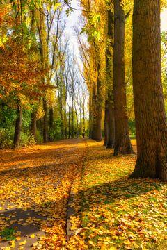 Herbst Rheinpark Allee van Dagmar Marina
