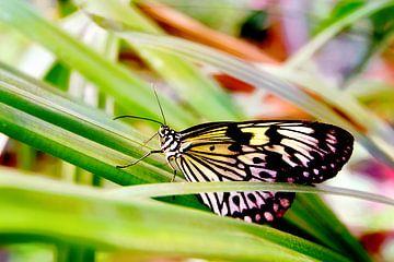 Kleurrijke vlinder in gras van Carin Klabbers