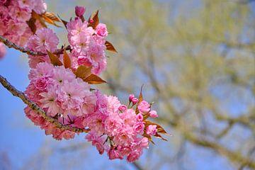 Ast mit frischer strahlender Blüte von 77pixels