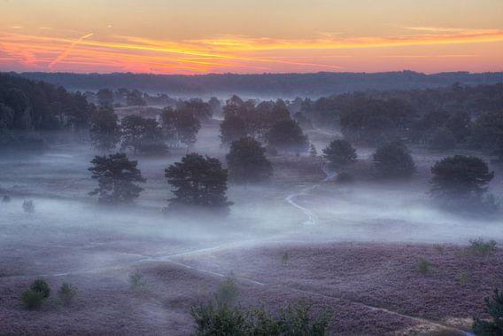 Schaduwen in de mist