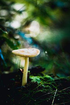 Pilz auf der Veluwe von Nick van Dijk