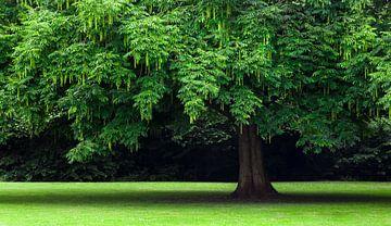 Groene boom van Karel Ton