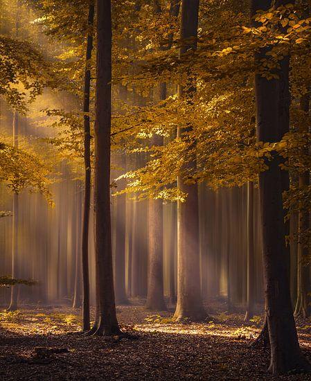 The golden delight, Brabant in Beeld winnaar