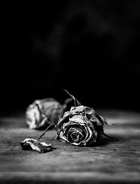 Mooie verdroogde rozen van Natalia Balanina
