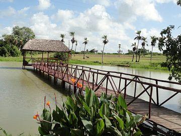Cuba Vallei van Vinales van Bianca Louwerens