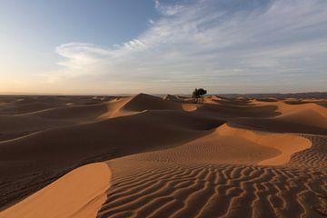 Woestijn van Kimberley Helmendag